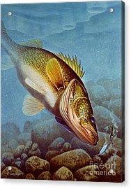 Walleye Ice Fishing Acrylic Print by Jon Q Wright