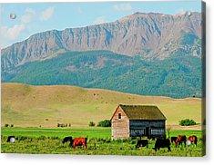 Wallowa Mountains And Barn In Field Acrylic Print by Nik Wheeler