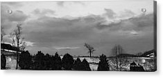 Walnut Tree In Bw Acrylic Print by Denise Romano