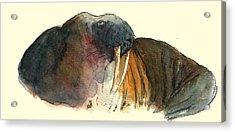 Walrus Acrylic Print by Juan  Bosco