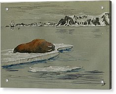 Walrus On The Iceberg Acrylic Print