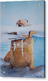 Walrus Acrylic Print