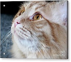 Walter The Cat Acrylic Print by Deborah Smolinske