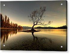 Wanaka - That Tree 1 Acrylic Print by Brad Grove