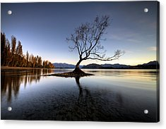 Wanaka - That Tree 2 Acrylic Print