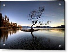 Wanaka - That Tree 2 Acrylic Print by Brad Grove