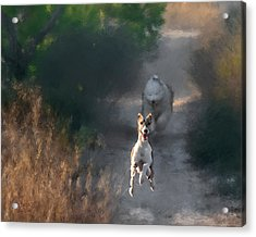 Acrylic Print featuring the photograph Wanda by Juan Carlos Ferro Duque