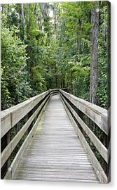 Acrylic Print featuring the photograph Wander by Laurie Perry