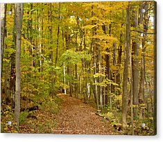 Wandering Trail 6 Acrylic Print by BackHome Images