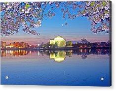 Waning Crescent Cherry Blossom Moon Acrylic Print