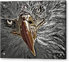 Acrylic Print featuring the painting War Eagle by Donna Proctor