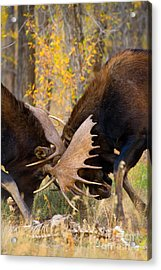 Acrylic Print featuring the photograph War In The Woods by Aaron Whittemore