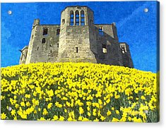 Warkworth Castle Daffodils Photo Art Acrylic Print