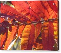 Warm Autumn Sun Acrylic Print by Loretta Pokorny