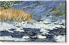 Warm Sun On The Winter Willows Acrylic Print by Sharon Lazarowicz