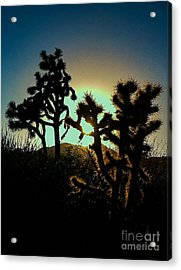Warmed By The Golden One Acrylic Print by Angela J Wright