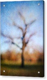 Warner Park Tree Acrylic Print by David Morel