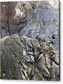 Warrior Crossing  Acrylic Print by Tim Rice