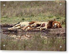 Warriors At Rest Acrylic Print