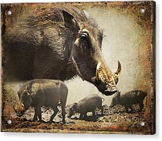 Warthog Profile Acrylic Print by Ronel Broderick