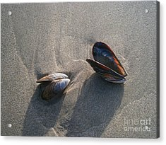 Washed Up Acrylic Print by Drew Shourd