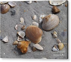Washed Up On The Beach Acrylic Print by Brigitte Emme
