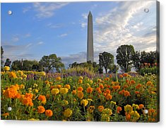 Washimgtom Monument In Spring Acrylic Print by Michael Donahue