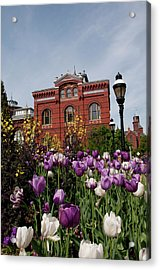 Washington Dc, Tulips At The Smithsonian Acrylic Print by Lee Foster