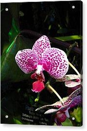 Washington Dc - Us Botanic Garden. - 12121 Acrylic Print by DC Photographer
