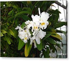 Washington Dc - Us Botanic Garden. - 121228 Acrylic Print by DC Photographer