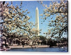 Washington Monument Cherry Blossoms Acrylic Print by Spyder Webb