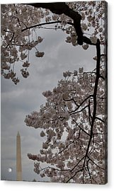 Washington Monument - Cherry Blossoms - Washington Dc - 011321 Acrylic Print by DC Photographer