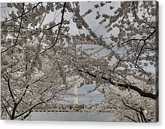 Washington Monument - Cherry Blossoms - Washington Dc - 011323 Acrylic Print by DC Photographer