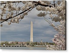 Washington Monument - Cherry Blossoms - Washington Dc - 011325 Acrylic Print