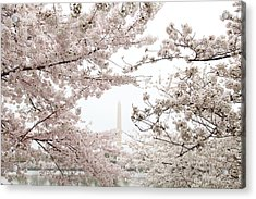 Washington Monument - Cherry Blossoms - Washington Dc - 011343 Acrylic Print