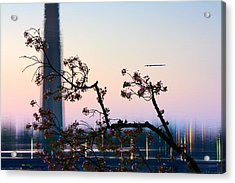 Washington Monument Reflection With Cherry Blossoms Acrylic Print