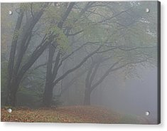 Washington Park Fog 1 Acrylic Print