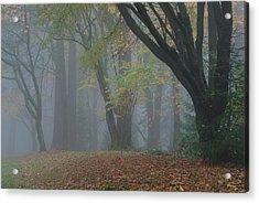 Washington Park Fog 2 Acrylic Print