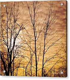 Washington's Winter Sky Acrylic Print