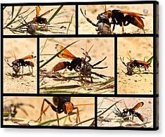 Acrylic Print featuring the photograph Wasp And His Kill by Miroslava Jurcik