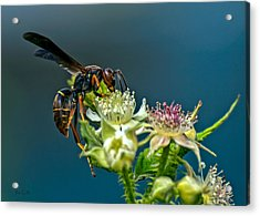 Wasp Acrylic Print by Bob Orsillo