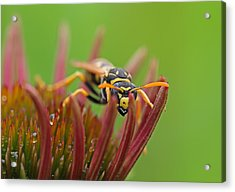 Wasp  Acrylic Print by Juergen Roth