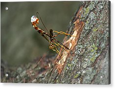 Wasphornet Acrylic Print by Mark Russell
