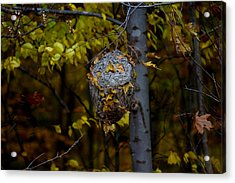 Acrylic Print featuring the photograph Wasp's Nest by Jerome Lynch