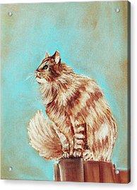 Watch Cat Acrylic Print