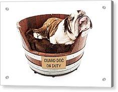 Watch Dog Sleeping On Job Acrylic Print by Susan Schmitz