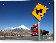 Watch Out For Llamas Acrylic Print by James Brunker