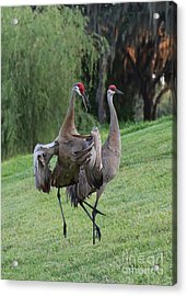 Watch Your Parents Acrylic Print by Carol Groenen