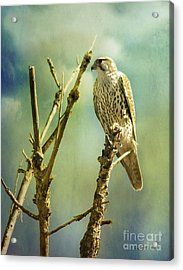Watcher Of The World Acrylic Print by Rhonda Strickland