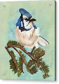 Watchful Blue Jay Acrylic Print by J Cheyenne Howell